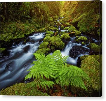 Canvas Print featuring the photograph Gorton Creek Fern by Darren White