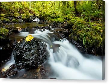 Beautiful Creek Canvas Print - Gorton Creek by Thorsten Scheuermann