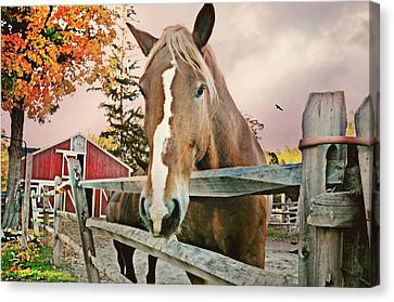 Got Carrots? Canvas Print by Diana Angstadt