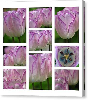 Debutante Canvas Print - Got Pink by Juergen Roth