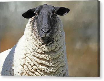 Got Shears ? Canvas Print by Donna Kennedy