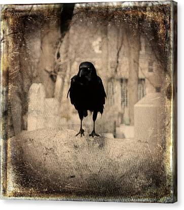 Gothic Sepia Crow Canvas Print by Gothicrow Images