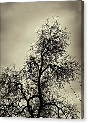 Gothic Tree Canvas Print by Robert Ullmann