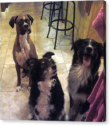 Gotta Love Dogs Canvas Print