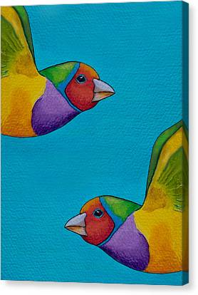 Gouldian Finches Canvas Print by Robert Lacy