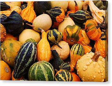 Gourds Canvas Print by Jame Hayes