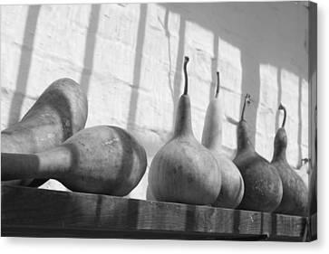 Gourds On A Shelf Canvas Print by Lauri Novak