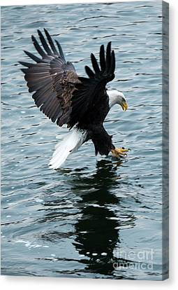 Grabbing For Lunch Canvas Print