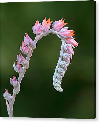 Canvas Print featuring the photograph Graceful by Elvira Butler