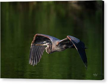 Canvas Print featuring the photograph Graceful Flight by Everet Regal