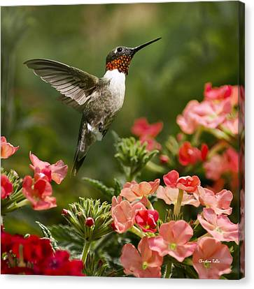 Graceful Garden Jewel Hummingbird Square Canvas Print by Christina Rollo