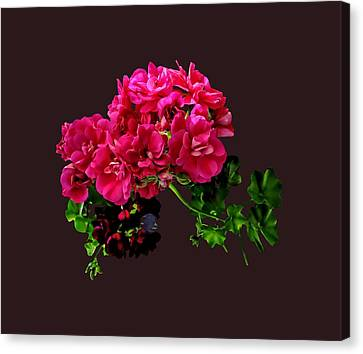 Graceful Geraniums Canvas Print by Susan Savad