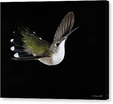 Graceful Canvas Print by Gerry Sibell