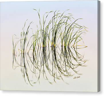 Graceful Grass Canvas Print