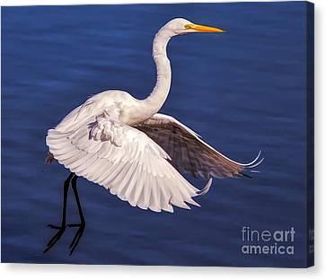 Canvas Print - Graceful by Paulette Thomas