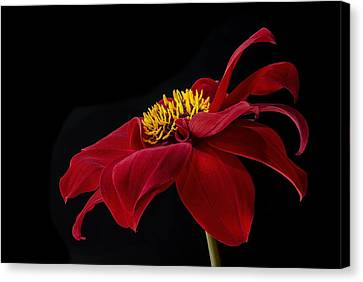 Graceful Red Canvas Print