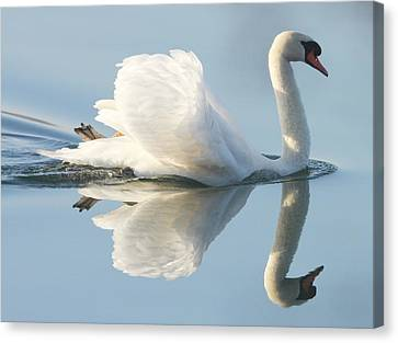 Reflection Canvas Print - Graceful Swan by Andrew Steele