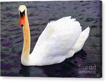 Ducklings Canvas Print - Graceful Swan by Mariola Bitner