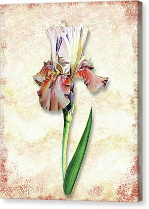 Canvas Print featuring the painting Graceful Watercolor Iris by Irina Sztukowski