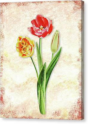 Canvas Print featuring the painting Graceful Watercolor Tulips by Irina Sztukowski