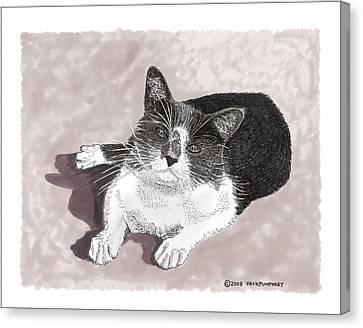Gracie Jacks Cat Now Canvas Print by Jack Pumphrey