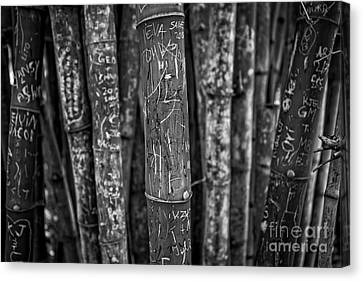 Graffiti Laden Bamboo Black And White Canvas Print by Edward Fielding