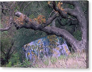 Graffiti Canvas Print by Soli Deo Gloria Wilderness And Wildlife Photography