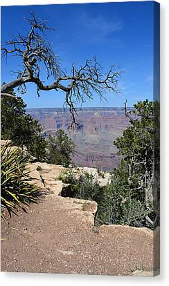Grand Canyon 2 Canvas Print by Aimee L Maher Photography and Art Visit ALMGallerydotcom