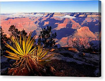 Canvas Print featuring the photograph Grand Canyon 31 by Donna Corless