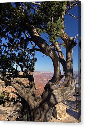 Grand Canyon Canvas Print - Grand Canyon No. 6 by Sandy Taylor