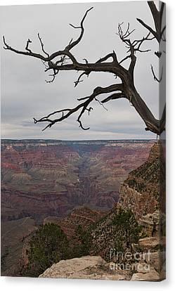 Gnarly Canvas Print - Grand Canyon Branches by Ana V Ramirez