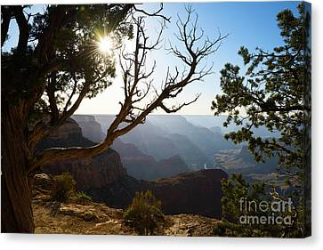 Grand Canyon Light Canvas Print by Jamie Pham