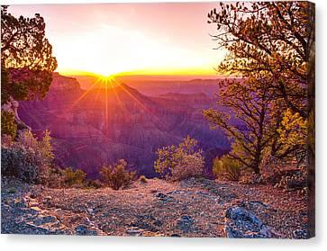 Grand Canyon Sunrise Canvas Print by Scott McGuire