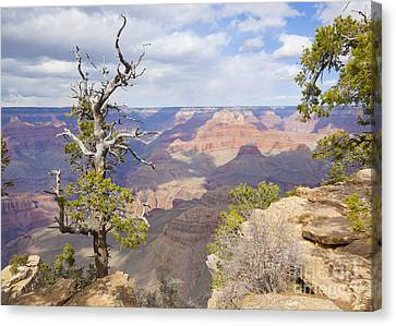 Canvas Print featuring the photograph Grand Canyon View by Chris Dutton