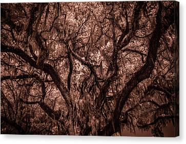 Canvas Print featuring the photograph Grand Daddy Oak Tree In Infrared by Louis Ferreira