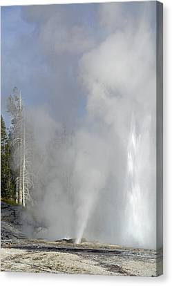 Grand Geyser Vertical Canvas Print by Bruce Gourley