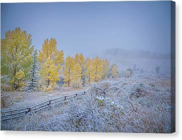 Snow-covered Landscape Canvas Print - Grand Teton Fall Snowfall Scene by Scott McGuire