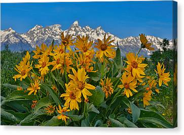 Grand Teton Mountain Range And Wildflowers Canvas Print