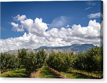 Grand Valley Orchards Canvas Print by Teri Virbickis