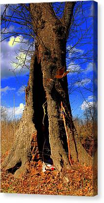 Canvas Print featuring the photograph Grandfather Tree by Kicking Bear  Productions