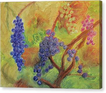 Grape Collage Canvas Print by Ken Figurski