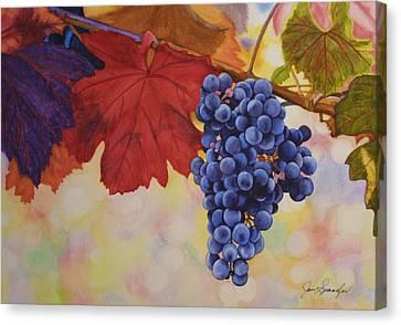 Grape Harvest Canvas Print by Jan  Spangler