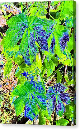 Grape Leaves Canvas Print