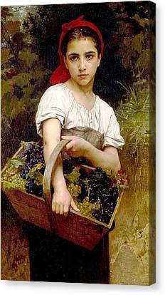 Grape Pickers Canvas Print - Grape Picker by Anne Pool