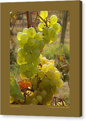 Grape Spiral Canvas Print by Patricia Overmoyer