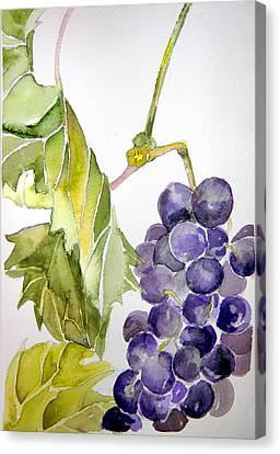 Grape Vine Canvas Print by Mindy Newman