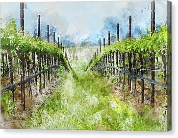 Grape Vines In Napa Valley California Canvas Print