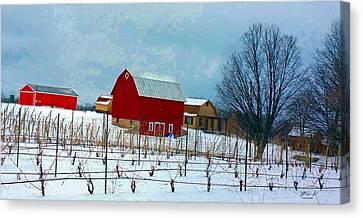 Grape Vines Canvas Print by Rob Mandell
