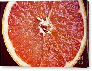 Grapefruit Half Canvas Print by Ray Laskowitz - Printscapes