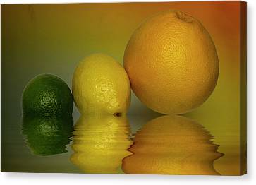 Grapefruit Lemon And Lime Citrus Fruit Canvas Print by David French